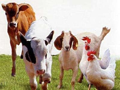我国首次公布动物利用