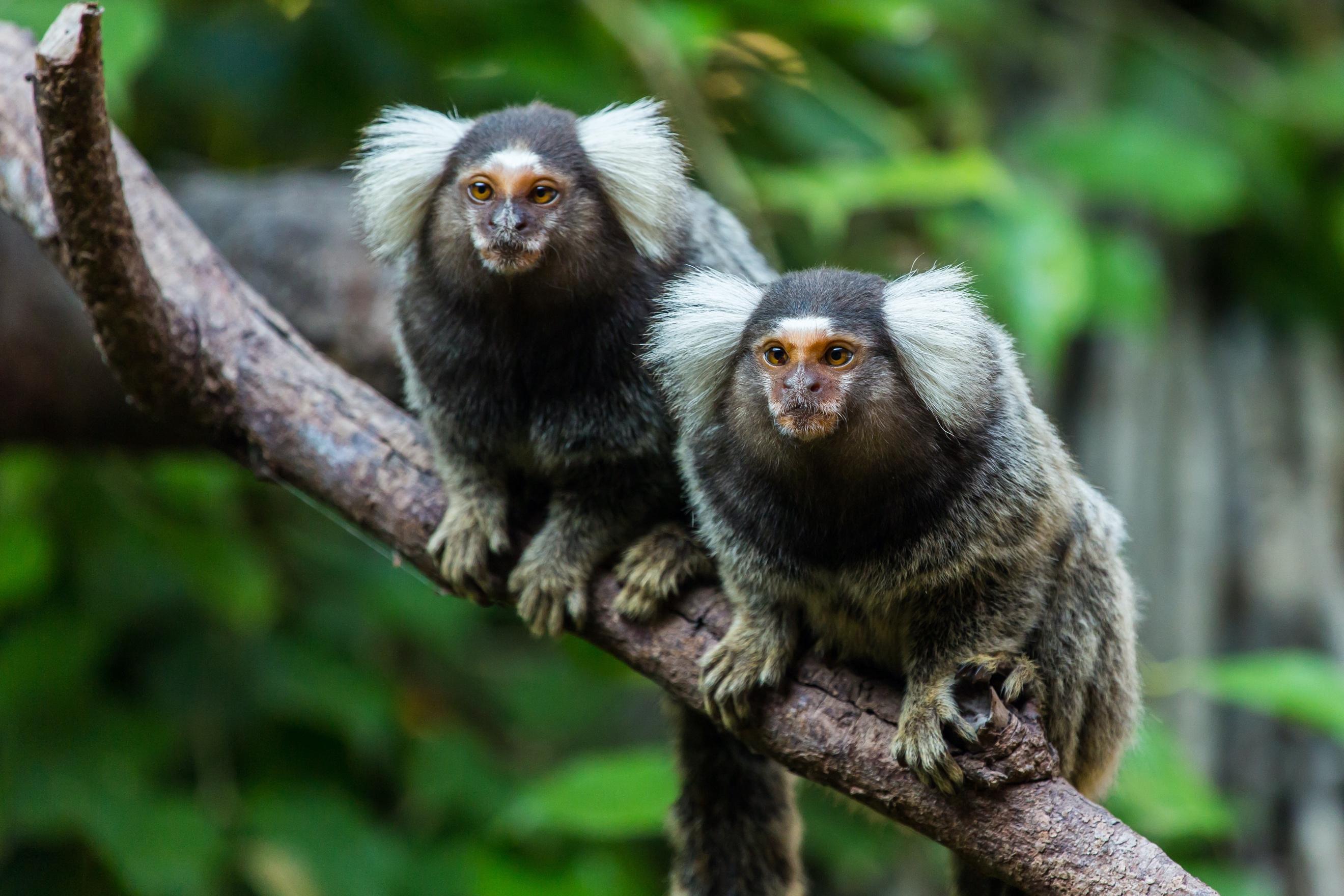 """疫情之下实验猴遭疯抢,全球""""一猴难求""""还要持续多久?"""