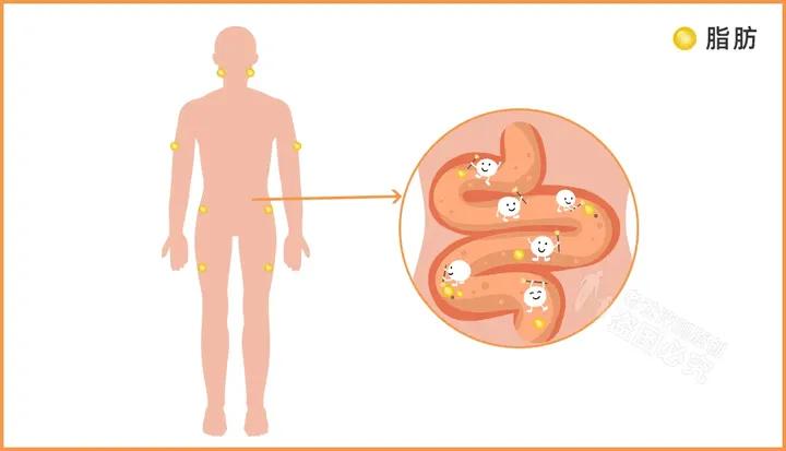 12款热门酵素评测:酵素真的能减肥?可以润肠通便吗?